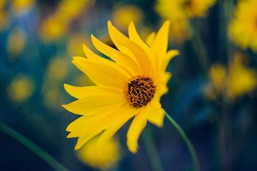 Free stock photo of nature, yellow, flower, blossom