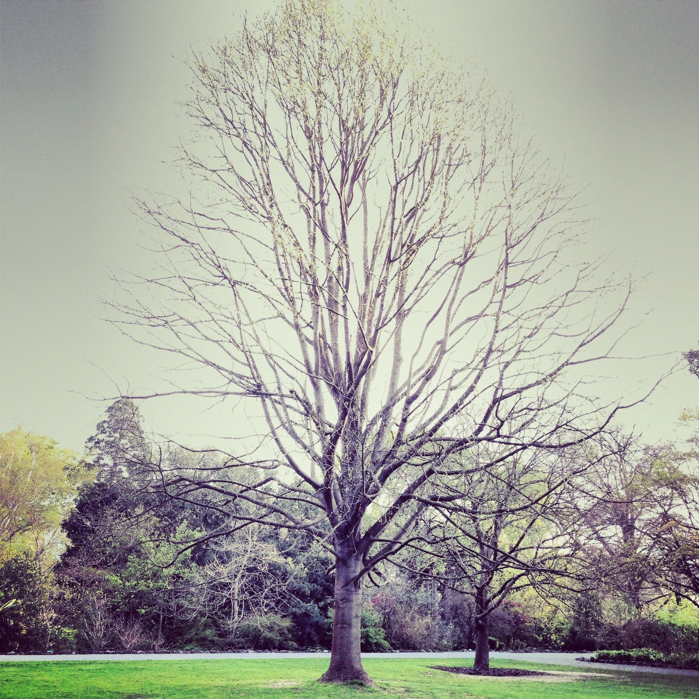 Free stock photo of sky, garden, trees, winter