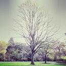sky, garden, trees
