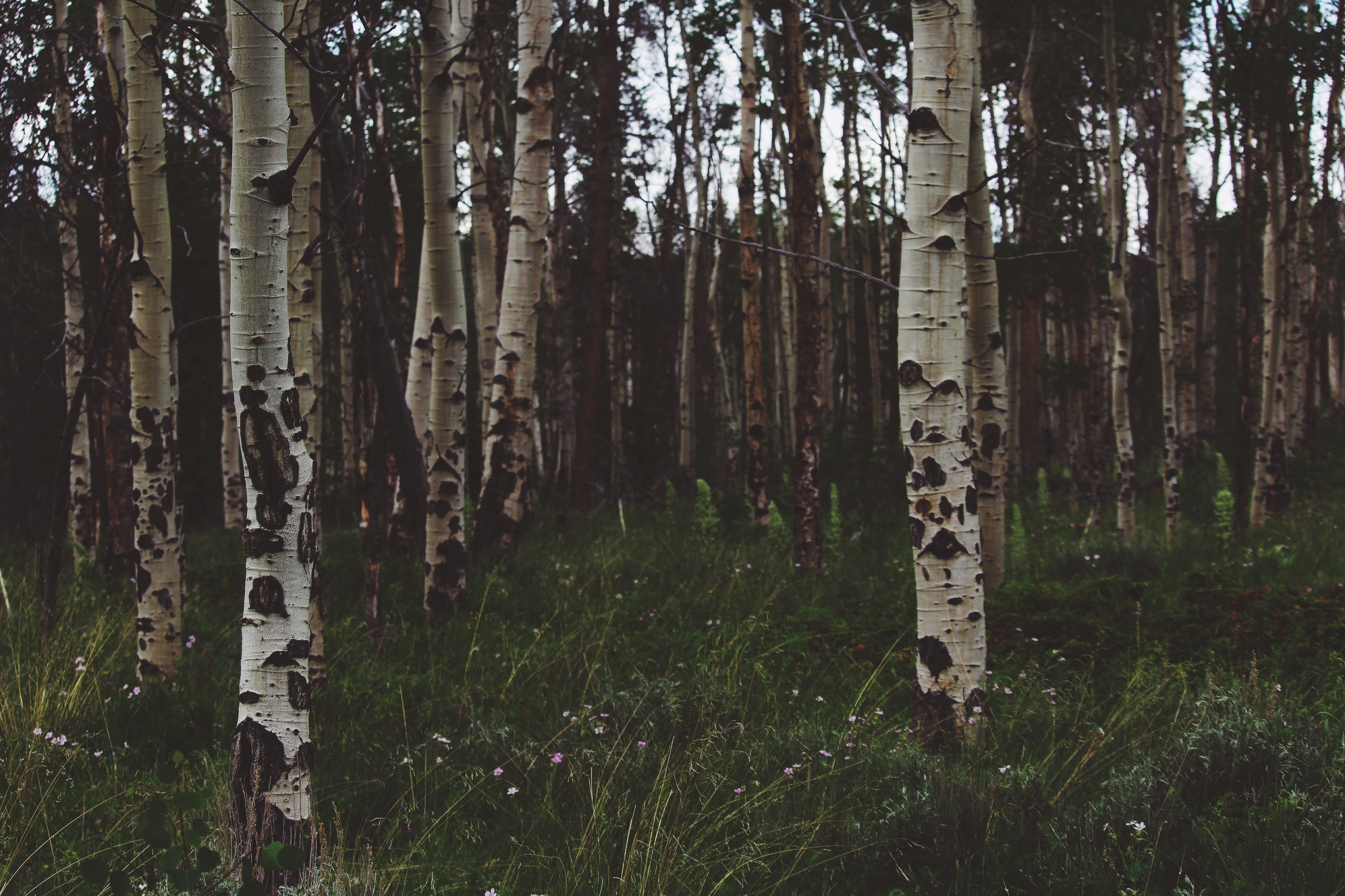 Free stock photo of wood, nature, trunks, forest