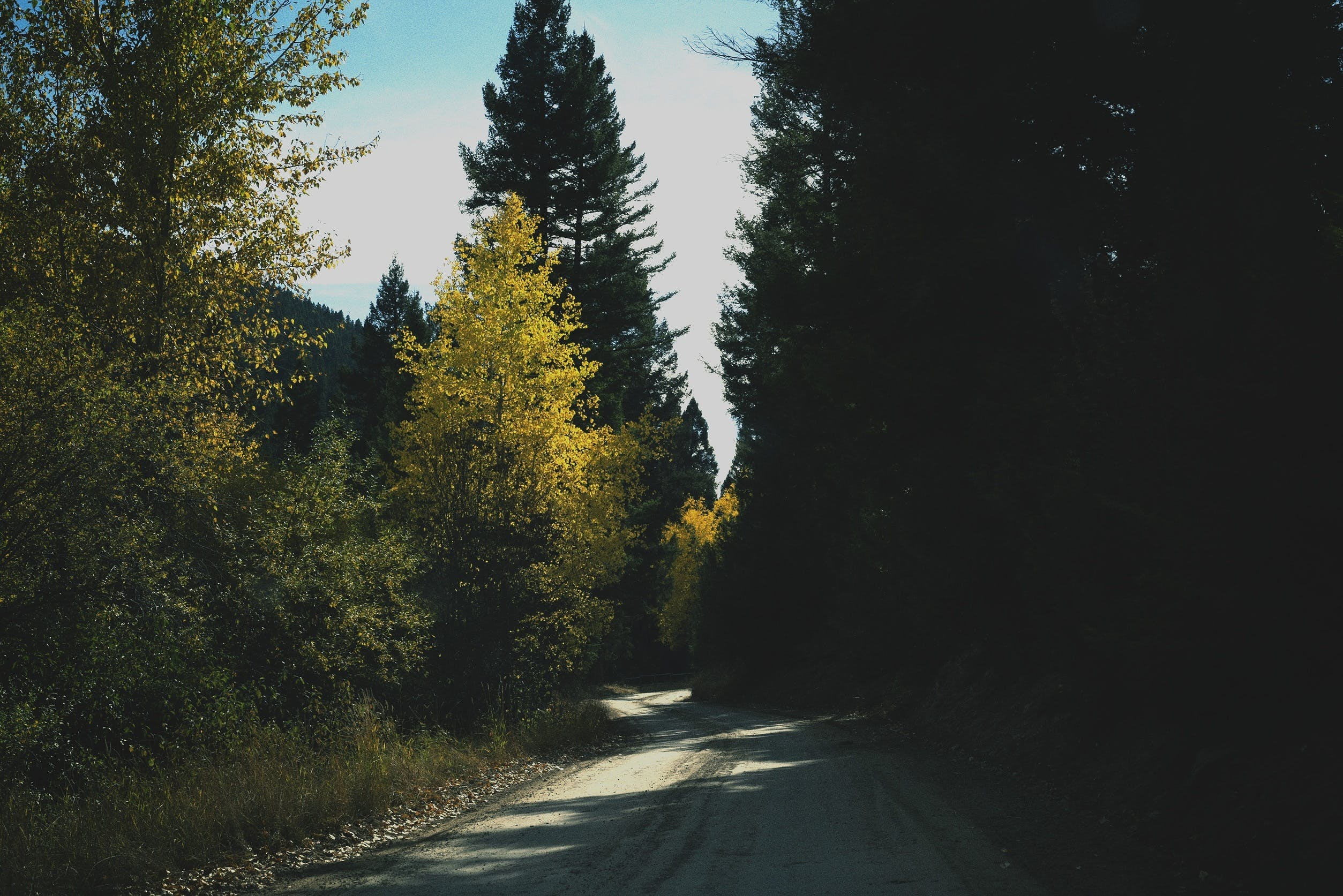 Free stock photo of road, rural, shadows, trees