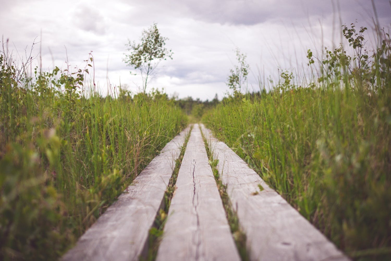 Free stock photo of wood, landscape, nature, sky