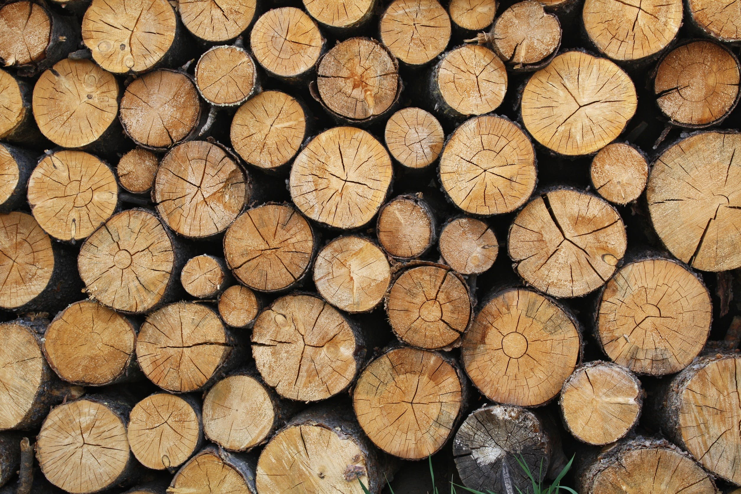 Free stock photo of forestry, logging, logs, lumber