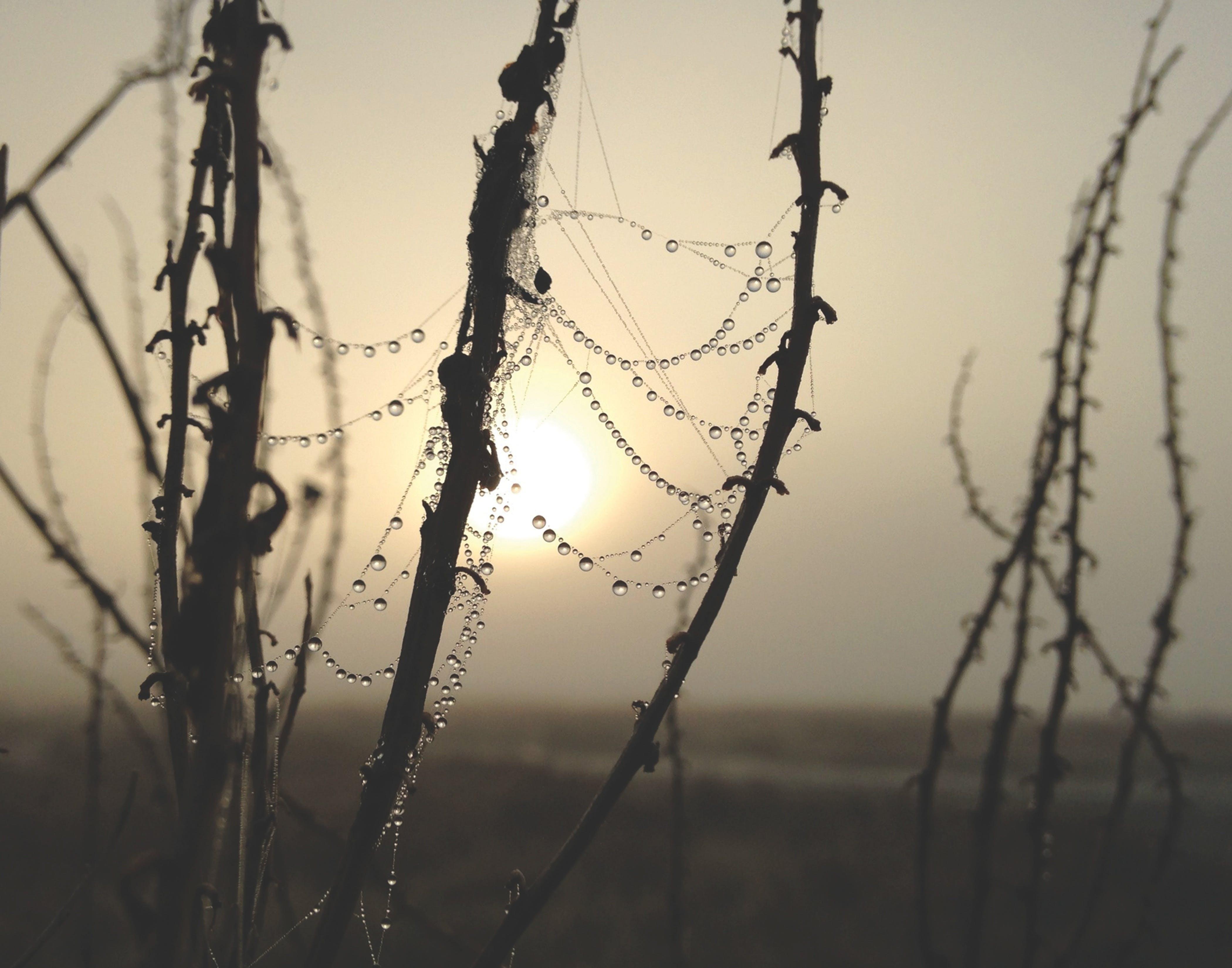 Dew on Plant Stem