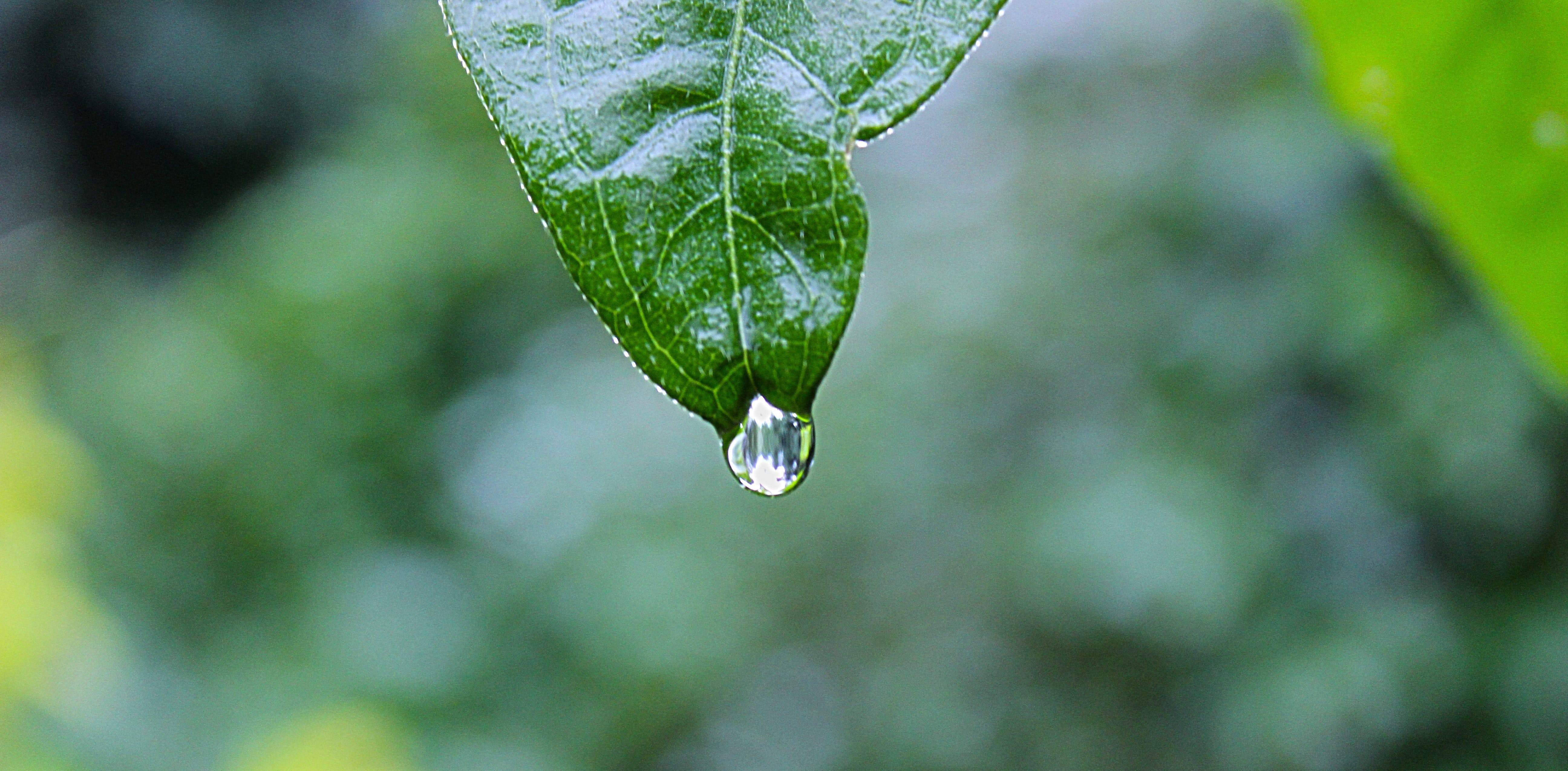 Free stock photo of water, leaf, green, raining