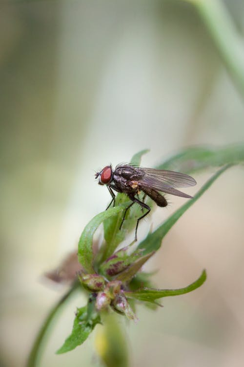 Black Fly Perched on Green Plant in Close Up Photography