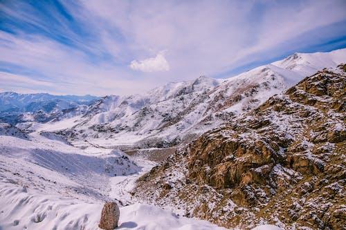 Foto d'estoc gratuïta de cobert de neu, constipat, fred