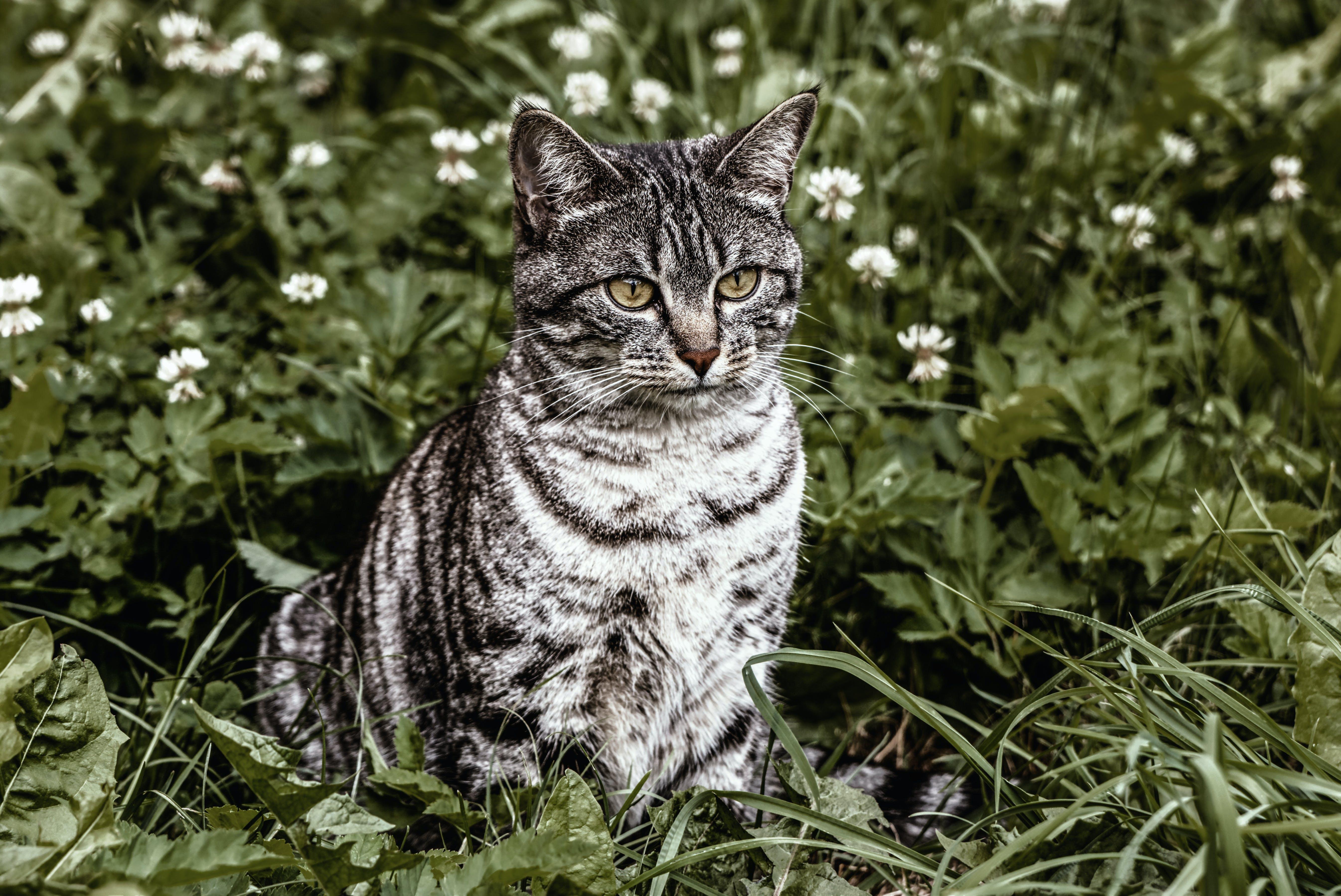 animal, animal photography, cat