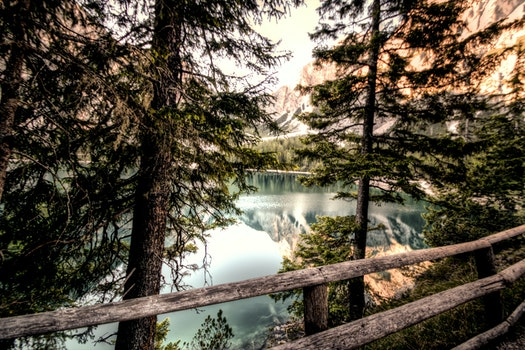 Free stock photo of landscape, nature, water, forest