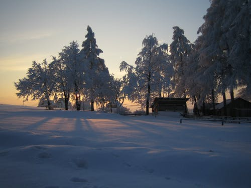 Snow covered field and trees in remote rural area with wooden buildings and fence in soft sunlight