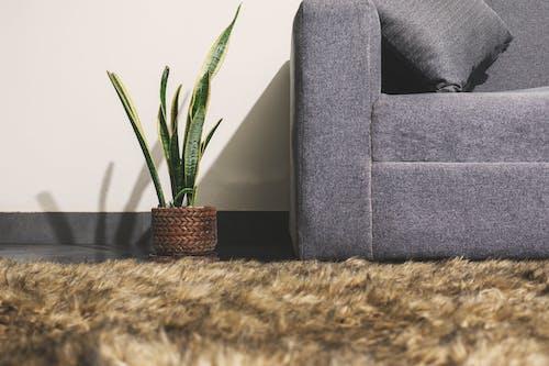 Бесплатное стоковое фото с в помещении, декорация, диван