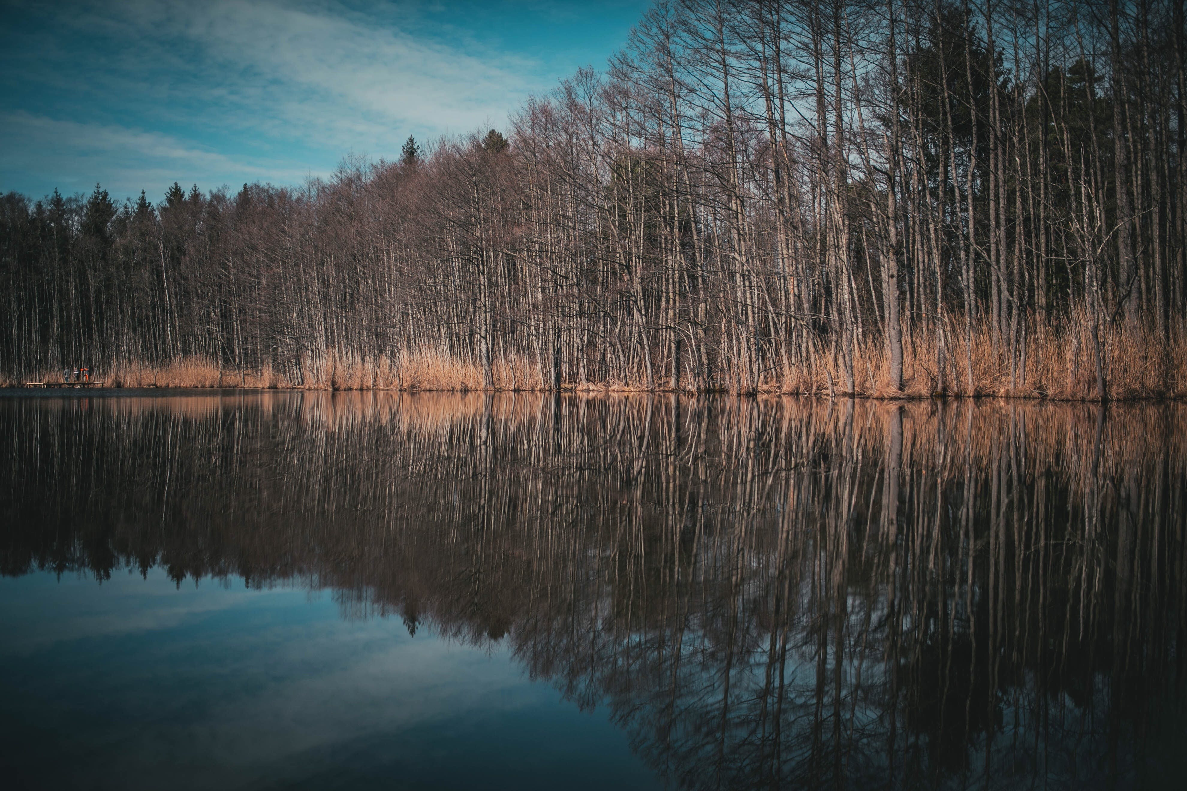 Photo of Leafless Trees With Reflection on Body of Water