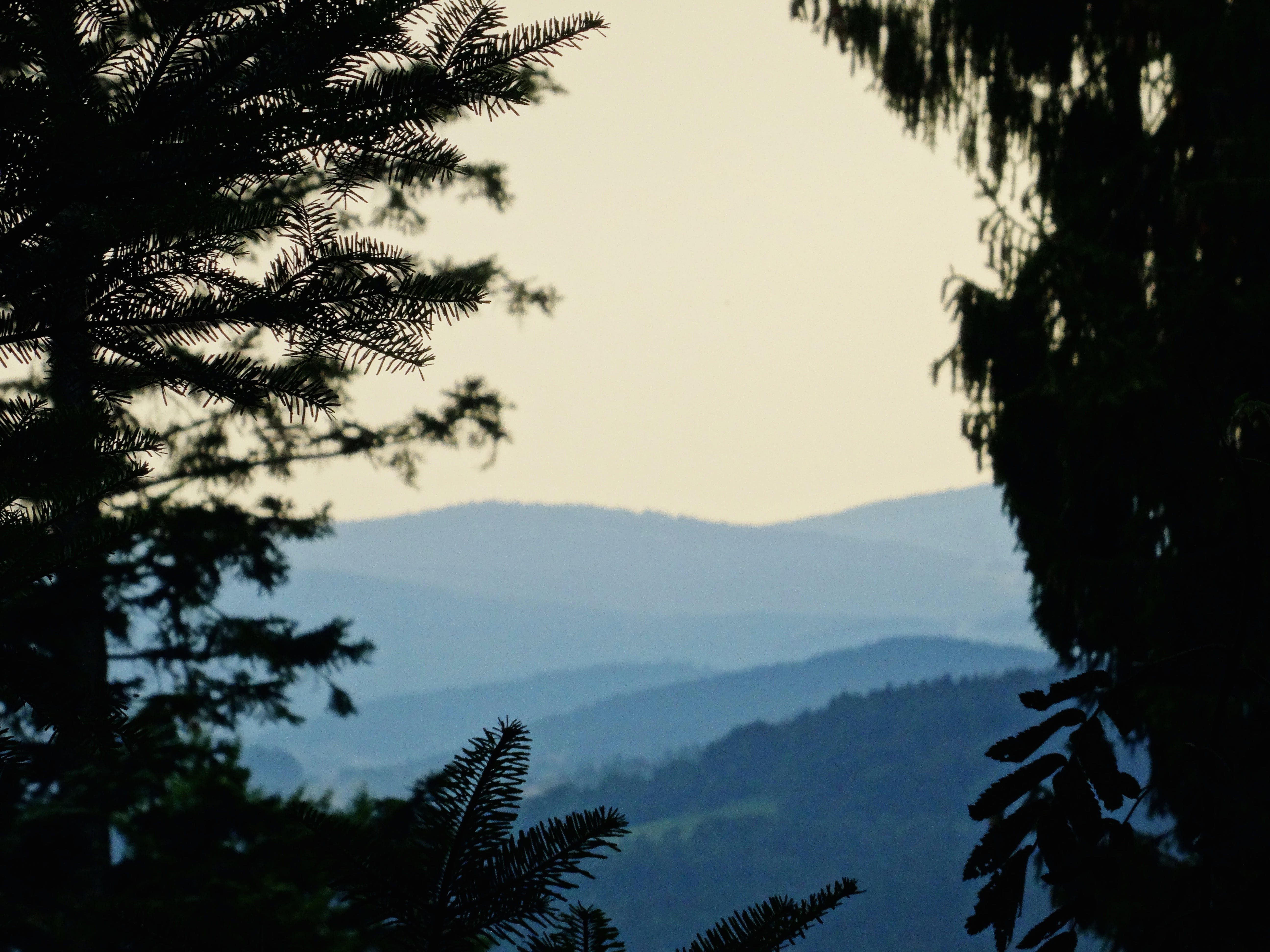 Silhouette of Trees With Mountain on Distant
