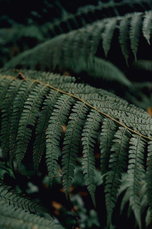 Foto profissional grátis de ao ar livre, árvore, aumento, biologia