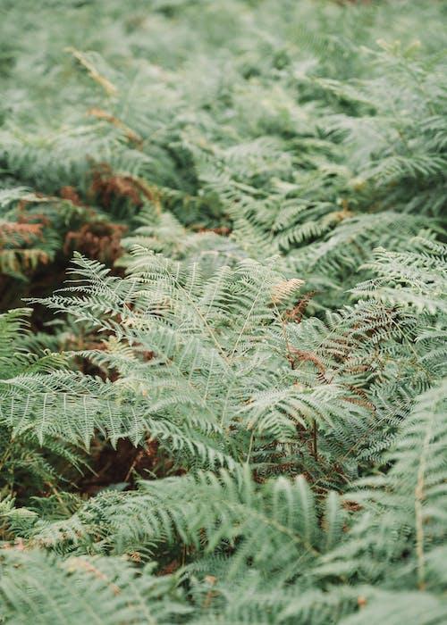 Wild lush fern plants on green meadow