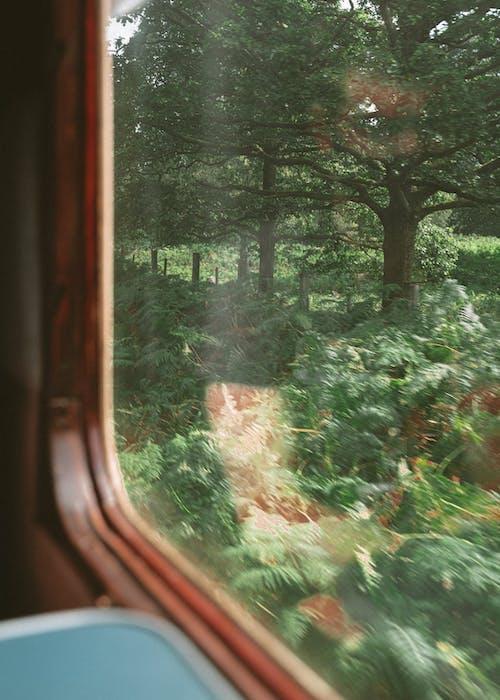 Window of train with lush greenery