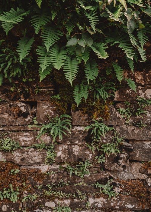 Green fern hanging on stone rough wall