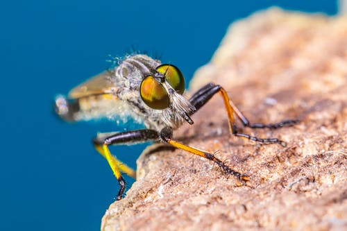 Fly Perched on Brown Rock