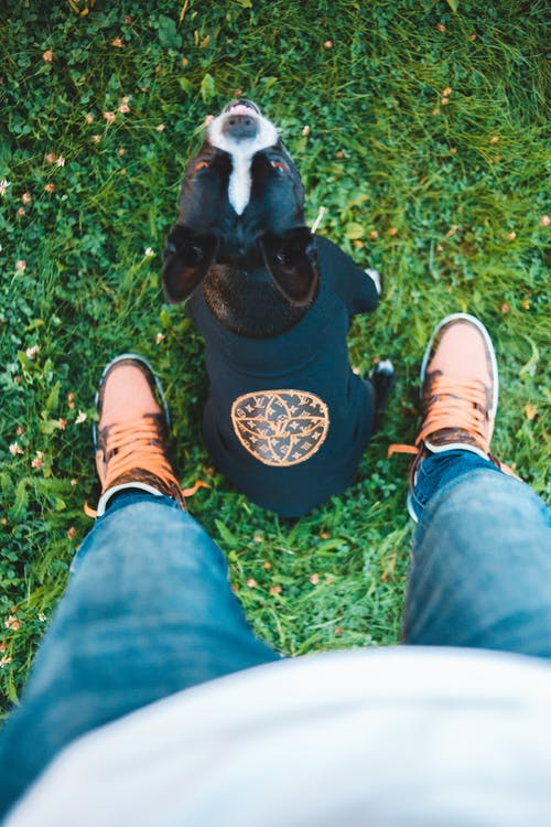 Top view of cute purebred dog looking at camera near crop anonymous person in jeans and sneakers on fresh grass