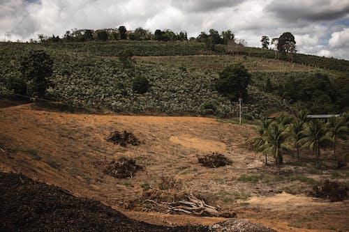 คลังภาพถ่ายฟรี ของ กลางแจ้ง, การเกษตร, ชนบท