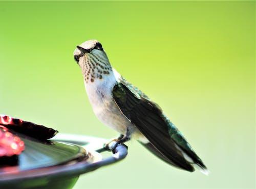 Imagine de stoc gratuită din animal, aviar, birdwatching