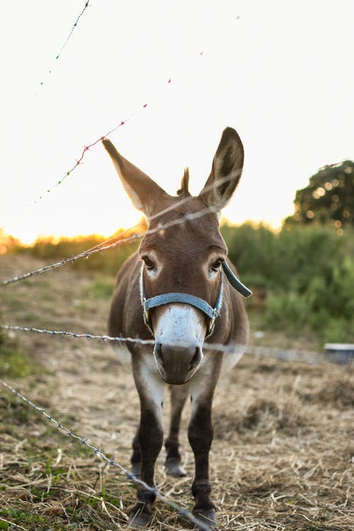 Cute donkey in bridle standing in enclosure