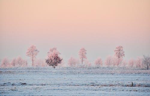 冬季, 冷, 大雪覆蓋 的 免費圖庫相片
