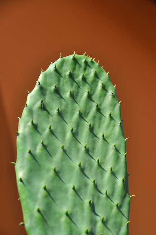 Бесплатное стоковое фото с завод, зеленый, кактус