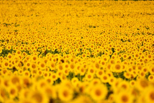 계절, 꽃, 꽃잎의 무료 스톡 사진