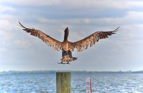 布赖恩·佩利卡恩, 降落 的 免费素材图片