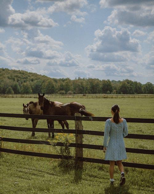 คลังภาพถ่ายฟรี ของ faceless, กรงขัง, กั้นรั้ว, การเกษตร
