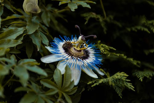 Blue and White Flower in Tilt Shift Lens