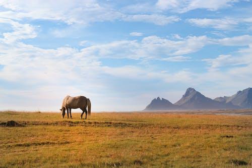 Horse on Green Grass Field