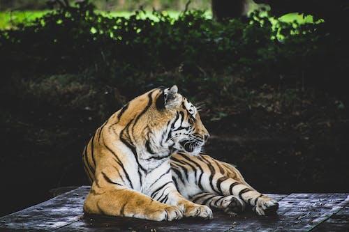 Ingyenes stockfotó állat, állatfotók, állatkert témában