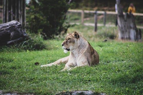 Immagine gratuita di animale, animale selvatico, erba