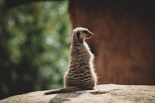 動物, 動物園, 動物攝影 的 免費圖庫相片