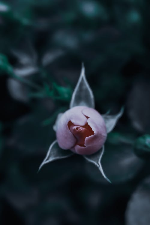 Top view of gentle bud of rose growing on thin stem in park