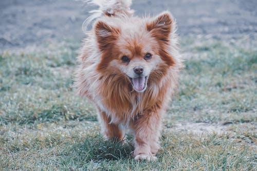 Cute dog walking on green meadow