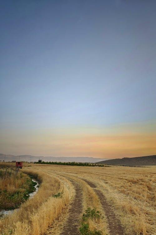 Photos gratuites de agriculture, campagne, chemin de terre