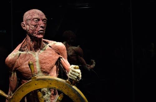 Fotos de stock gratuitas de Arte, ciencia, cuerpo, cuerpos reales