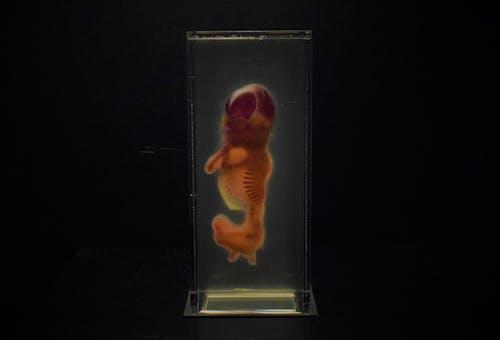 Fotos de stock gratuitas de ciencia, exposición, exposición de arte, extraño