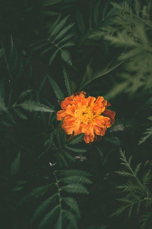Orange Petaled Flower in Bloom