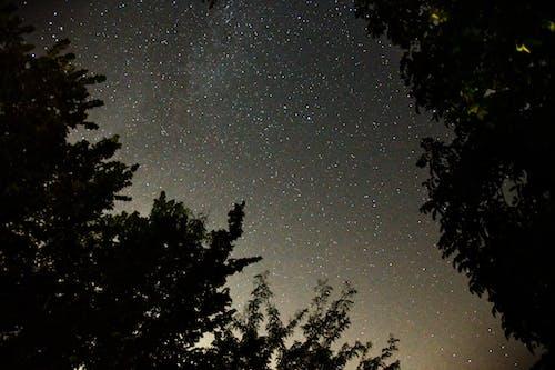 ağaçlar, astronomi, gece içeren Ücretsiz stok fotoğraf