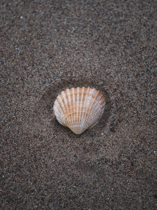 Top view of colorful sea shell with ribbed surface on dry sandy coast in daytime