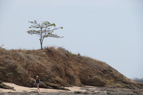 Free stock photo of beach, costa rica, tree