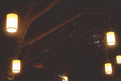 Brown Lantern Hanging on Tree
