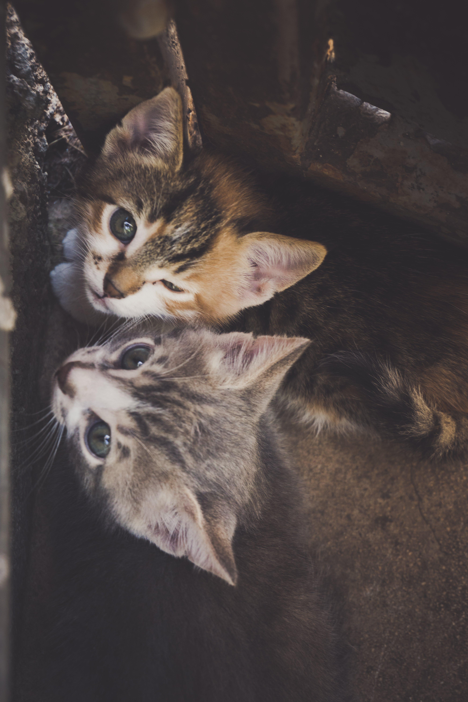 Free stock photo of animal, animal photography, beautiful, cat