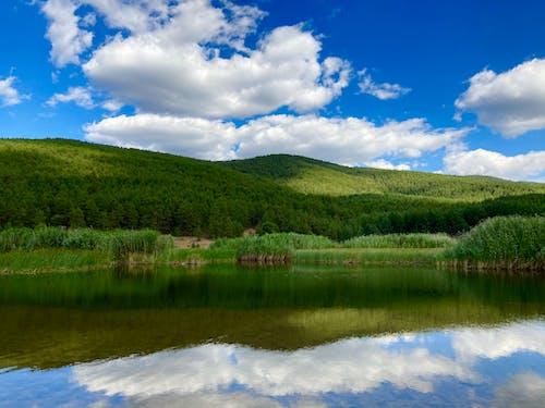 Green Trees Near Lake Under Blue Sky