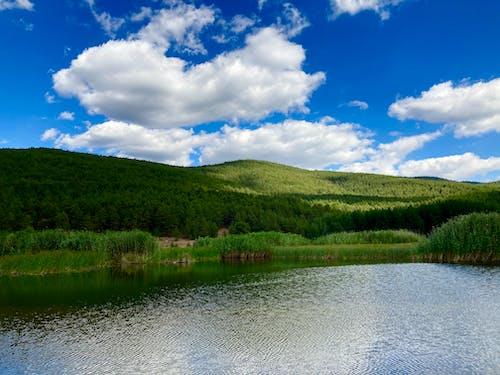 Immagine gratuita di alberi, boschi, esterno