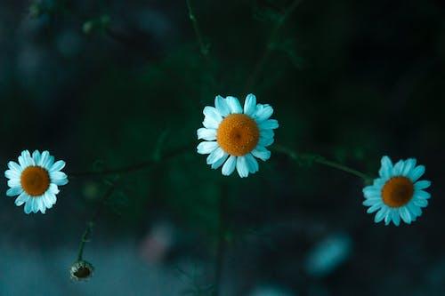 Free stock photo of beautiful nature, beauty, blooming